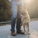 Is Your Dog Uncomfortable with Strangers? Here Is What You Should Know