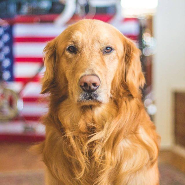 Dog Board and Train Program