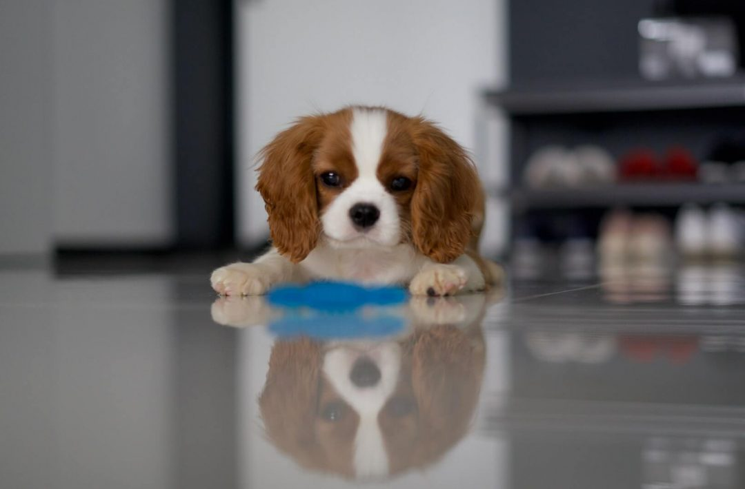 Expert Tips to Set Up Your Home for a New Puppy