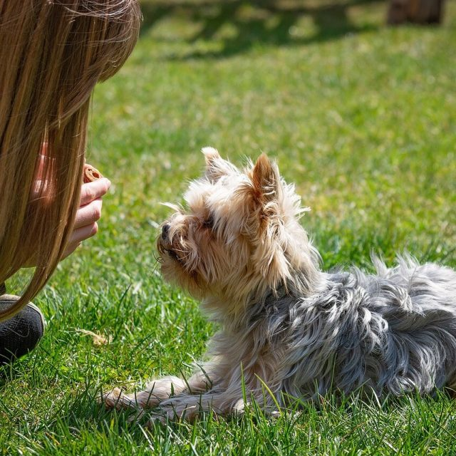 private dog training in Vancouver